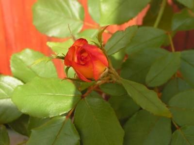 Photo_2009_07_ 312